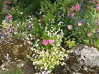 Massif fleuri 1 (Copier)