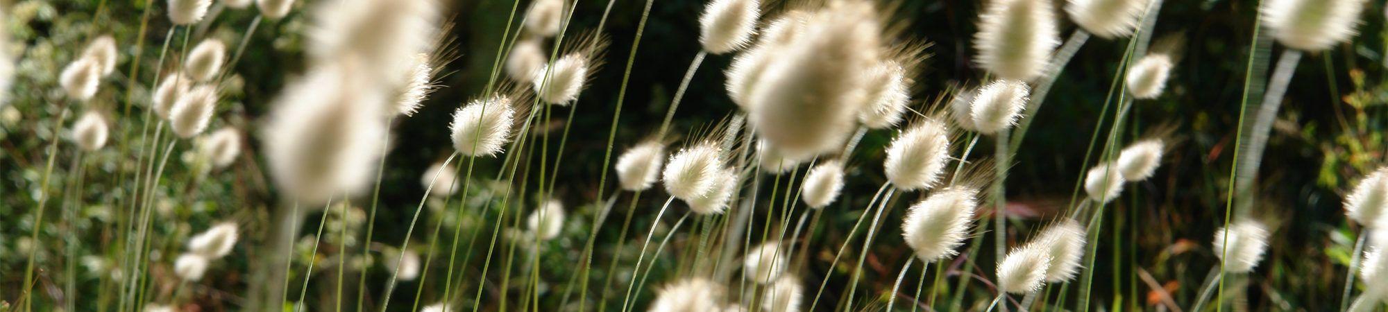 Bandeau de la page 'Fleurissement et espaces verts / Plan vert