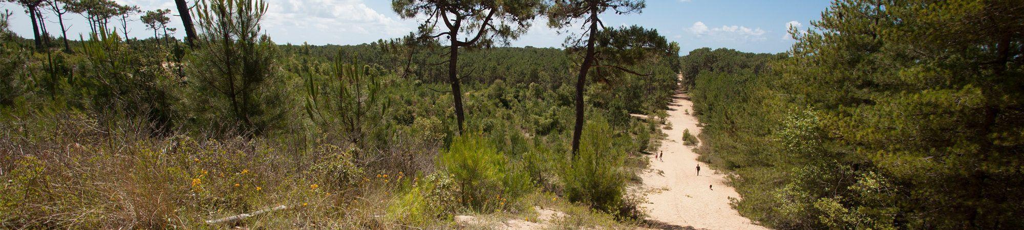 Bandeau de la page 'La forêt
