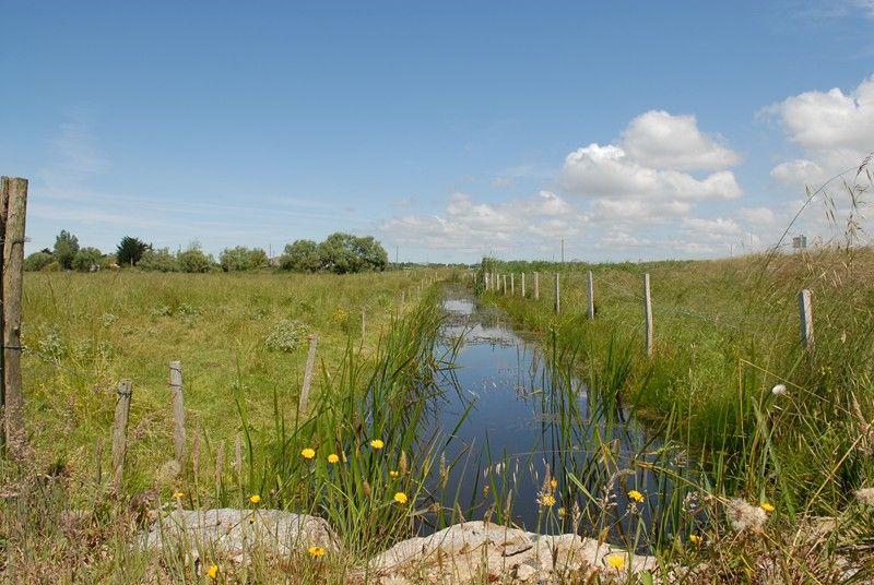 Marais doux de Saint-Hilaire-de-Riez © Vendée numérique