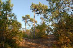 Photos-Forêt-©-Vendée-numérique-©-Vendée-numérique2271